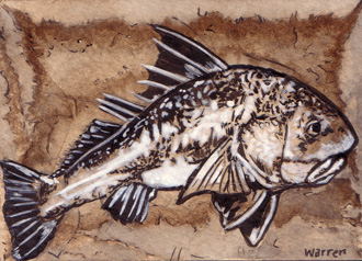 black_drum_sketch_card_web