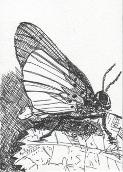 butterfly_0