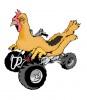 all-terrain-chicken