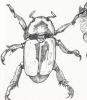 beetle_web