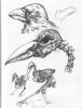 raven_web