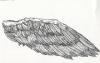 wing_web