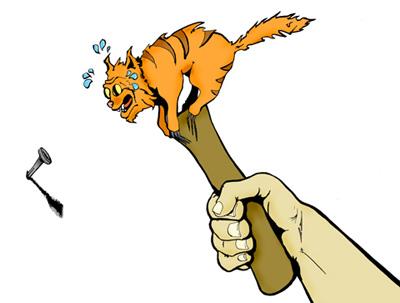cat-hammer