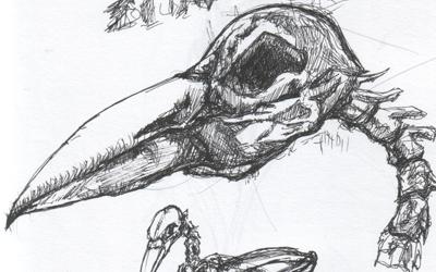 raven_2_web_detail